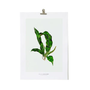 Illustration plante