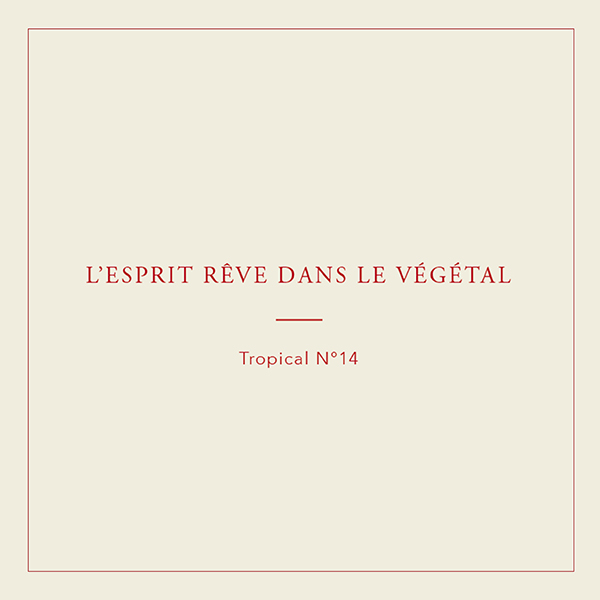 Collection végétale, Tropical n°14
