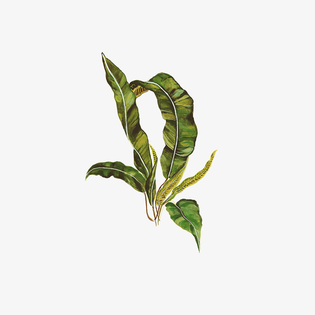 MB - Illustration Plantes - Décoration Made in France