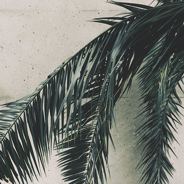 MB - Ambiance végétale - Inspiration - ss18-7