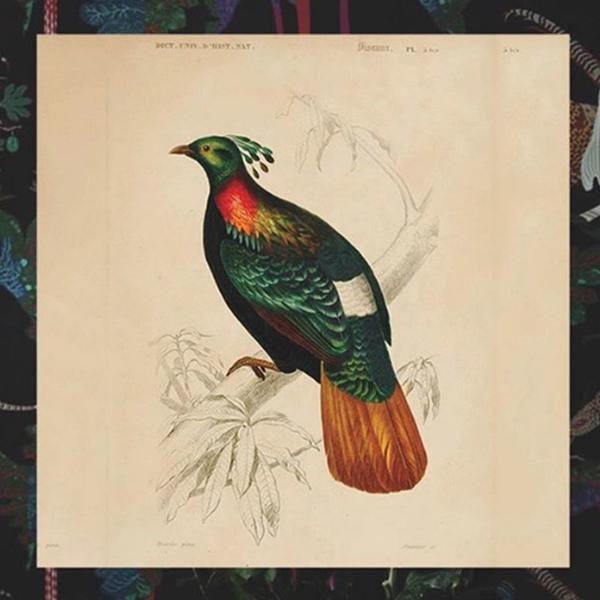 MB - Illustration Oiseau - AW18-10