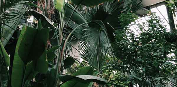 MB - Inspiration Nature, Jardin et Plantes